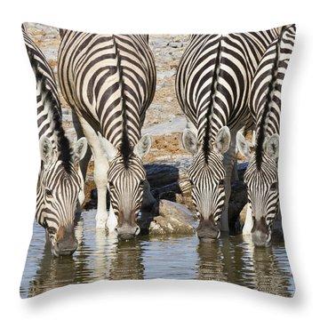 Burchells Zebras Drinking Etosha Np Throw Pillow