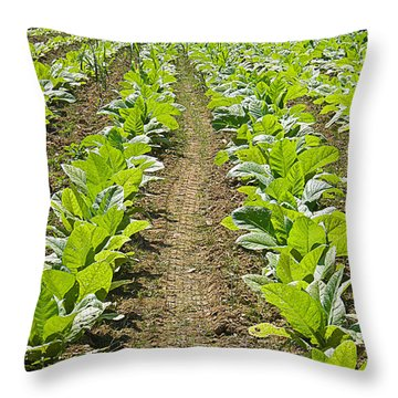 Burley Tobacco Throw Pillow