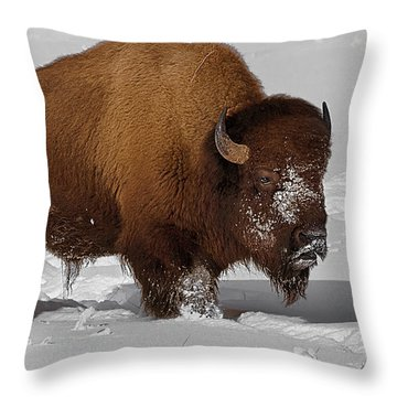 Burly Bison Throw Pillow by Priscilla Burgers