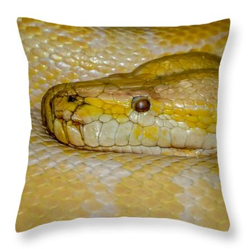 Burmese Python Throw Pillow by Ernie Echols