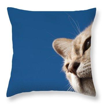 Burmilla Nose Throw Pillow by Anne Gilbert