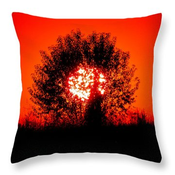 Burning Bush Throw Pillow by Nick Kirby