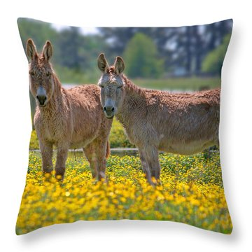 Burros In The Buttercups Throw Pillow
