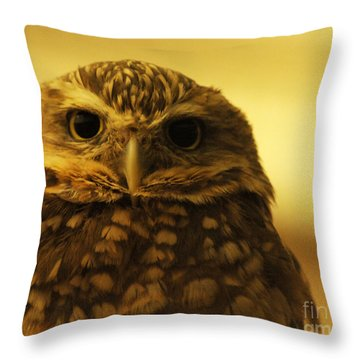 Throw Pillow featuring the photograph Burrowing Owl by Olivia Hardwicke