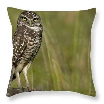 Burrowing Owl Stare Throw Pillow