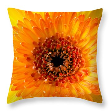 Burst Of Sunshine Throw Pillow by Shelby  Young