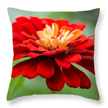 Bursts Of Color Throw Pillow by Parker Cunningham