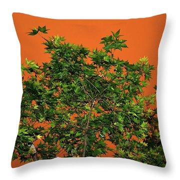 Bushfire Skies Throw Pillow by Kaye Menner