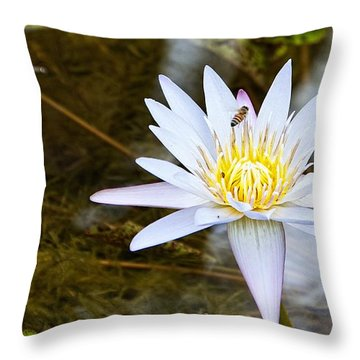Throw Pillow featuring the photograph Busy Bee by Dave Files