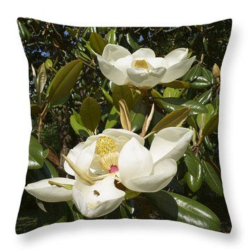 Busy Bee In A Magnolia Blossom 2 Throw Pillow