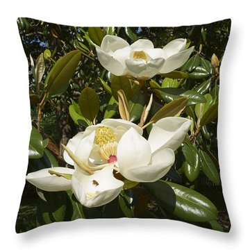 Busy Bee In A Magnolia Blossom 2 Throw Pillow by MM Anderson