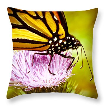 Busy Butterfly Throw Pillow
