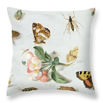 Butterflies Moths And Other Insects With A Sprig Of Apple Blossom Throw Pillow by Jan Van Kessel