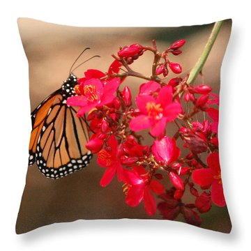 Throw Pillow featuring the photograph Butterfly 1 by Leticia Latocki