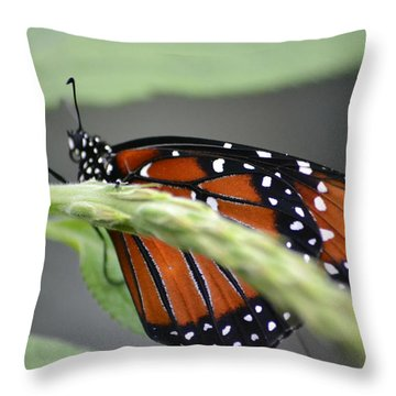 Throw Pillow featuring the photograph Butterfly 1 by Michael Colgate