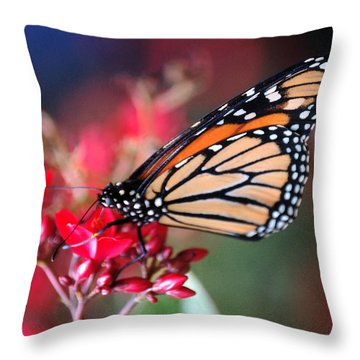 Throw Pillow featuring the photograph Butterfly 2 by Leticia Latocki