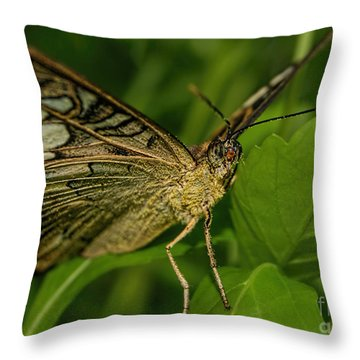 Throw Pillow featuring the photograph Butterfly 2 by Olga Hamilton