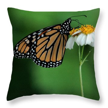 Throw Pillow featuring the photograph Butterfly 3 by Leticia Latocki