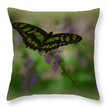 Throw Pillow featuring the photograph Butterfly 4 by Leticia Latocki