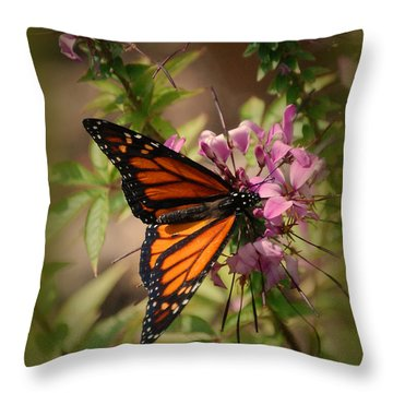 Throw Pillow featuring the photograph Butterfly 5 by Leticia Latocki