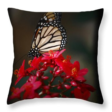 Throw Pillow featuring the photograph Butterfly 6 by Leticia Latocki