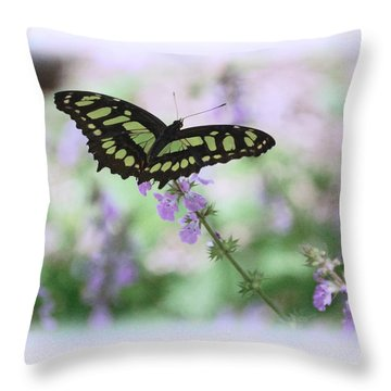 Throw Pillow featuring the photograph Butterfly 8 by Leticia Latocki