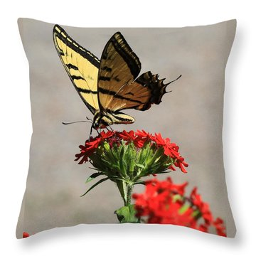 Throw Pillow featuring the photograph Butterfly And Maltese Cross 1 by Aaron Aldrich