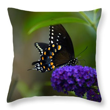Butterfly Atttaction Throw Pillow