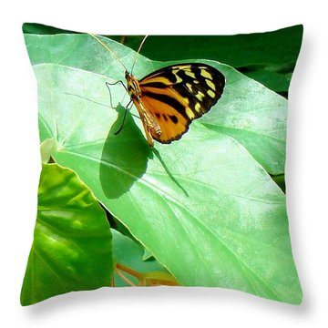 Throw Pillow featuring the photograph Butterfly Chasing Shadow by Janette Boyd