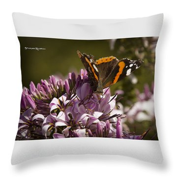 Throw Pillow featuring the photograph Butterfly Close Up by Stwayne Keubrick