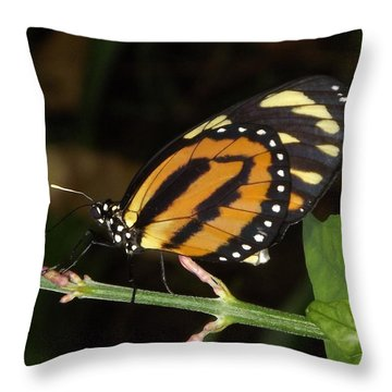 Butterfly Collecting Nectar Throw Pillow by Bill Woodstock