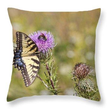 Butterfly Throw Pillow by Daniel Sheldon