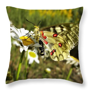 Butterfly Enjoying The Day Throw Pillow