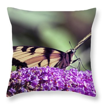 Butterfly Feeding Throw Pillow