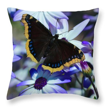Butterfly In Blue Throw Pillow by Heidi Smith