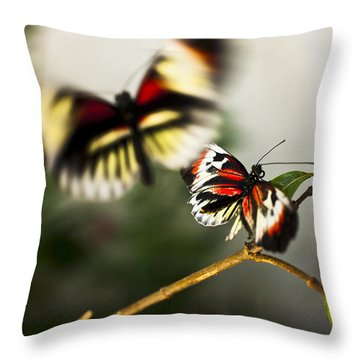 Throw Pillow featuring the photograph Butterfly In Flight by Bradley R Youngberg