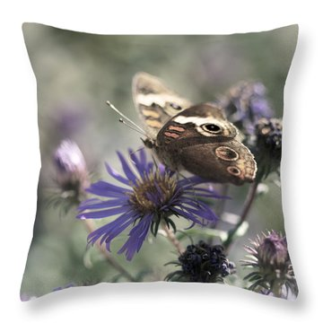 Butterfly In Pastel - Buckeye On Asters Throw Pillow by Jane Eleanor Nicholas