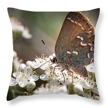 Butterfly In The Garden Throw Pillow