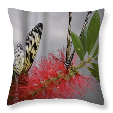Butterfly Love Throw Pillow by Carla Carson