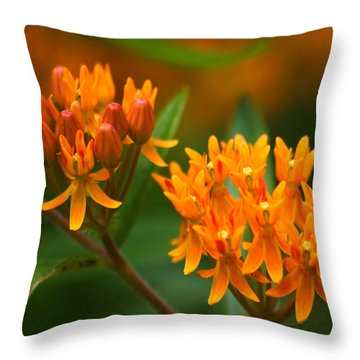 Butterfly Milkweed Throw Pillow by Adam Romanowicz
