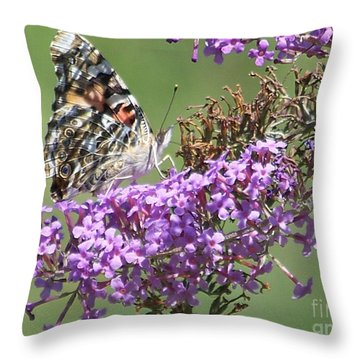 Throw Pillow featuring the photograph Painted Lady Butterfly by Eunice Miller