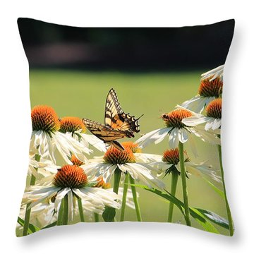 Butterfly On Echinacea Throw Pillow