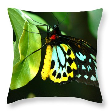 Butterfly On Leaf Throw Pillow by Laurel Powell