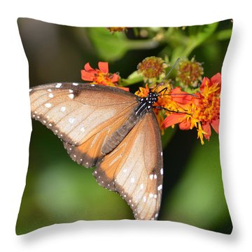 Butterfly On Mexican Flame Throw Pillow by Debra Martz