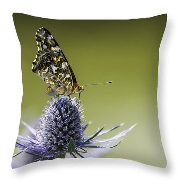 Throw Pillow featuring the photograph Butterfly On Thistle by Peter v Quenter