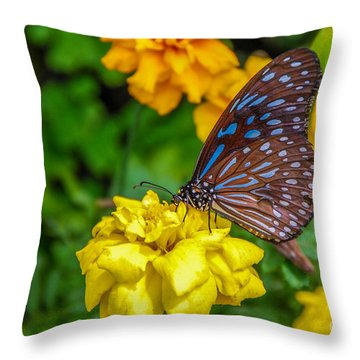 Butterfly On Yellow Marigold Throw Pillow