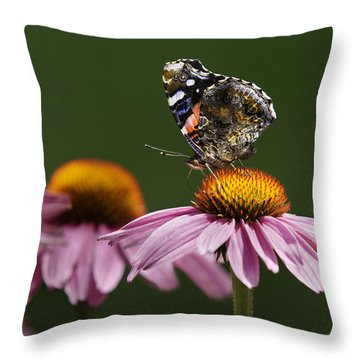 Throw Pillow featuring the photograph Butterfly Red Admiral On Echinacea by Peter v Quenter