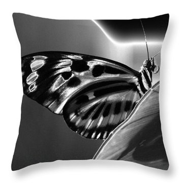 Butterfly Solarized Throw Pillow