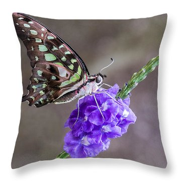 Butterfly - Tailed Jay I Throw Pillow