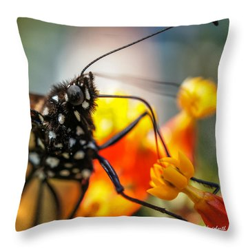 Throw Pillow featuring the photograph Butterfly Tongue Squared by TK Goforth